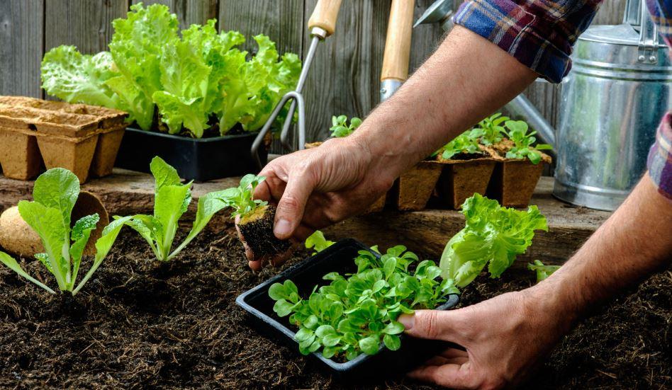conciencia-ecologica-cultiva-tus-alimentos-huerto-en-casa