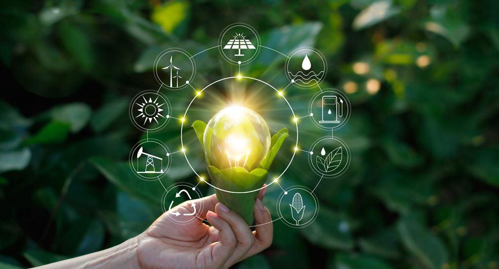 crea la pagina web de tu negocio ecologico